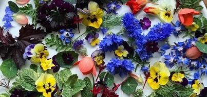 Virágos álmok  –  Sajt-virág ízharmóniák